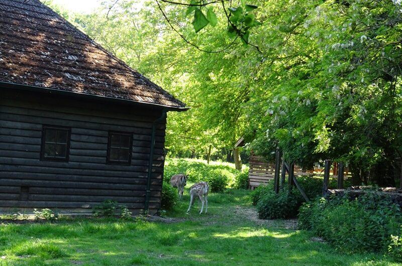 Rehe beim Lobau Forsthaus