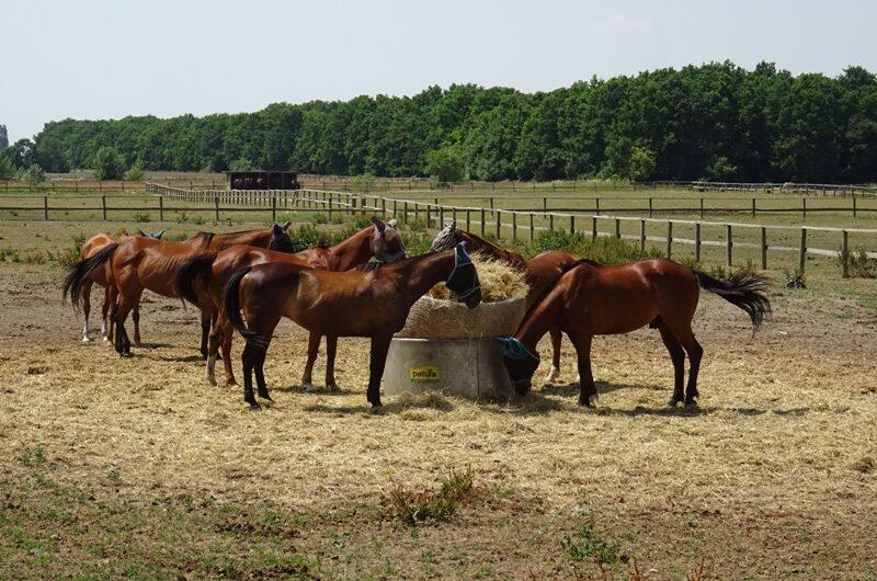 Pferde bei Schloss Niederweiden